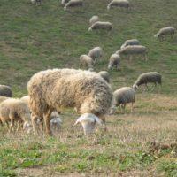 Il Forletto Farm