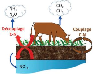 Cycle simplifié du carbone en prairie (d'après Chabbi et al, 2014)