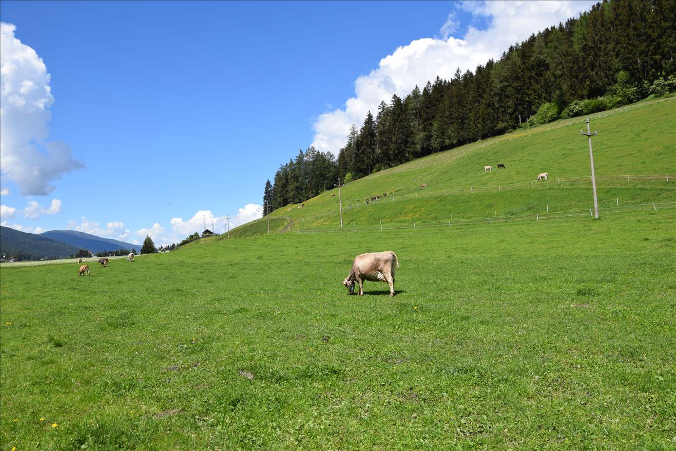 Short sward grazing and combination between barn-drying of ...