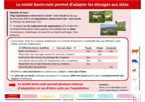 La mixité bovin-ovin permet d'adapter les élevages aux aléas